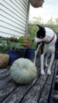 Original small back deck. Only room for a dog and pumpkin