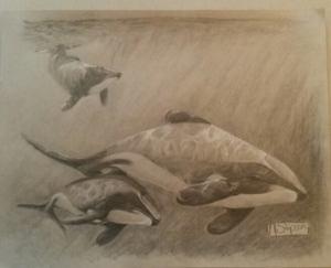 Maui's Dolphins family